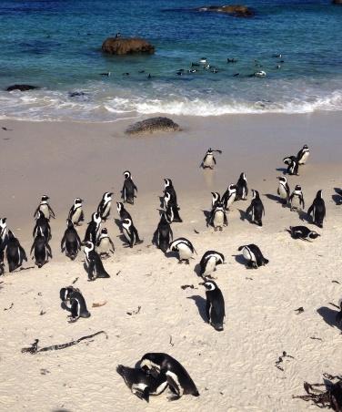 Boudler: A praia dos pinguins!